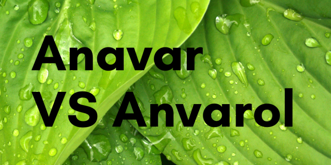 comparison between Anavar & Anvarol