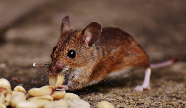 Lassa Fever: Symptoms, Treatments and Preventions